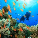 2. Try Dive Fiji