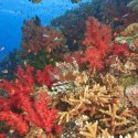 6. Colourful reef Fiji