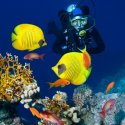 6. Diving with the sealife in Fiji