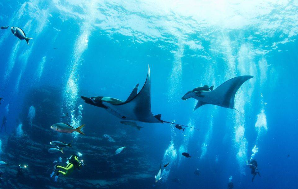 Fiji mantaray season diving dive