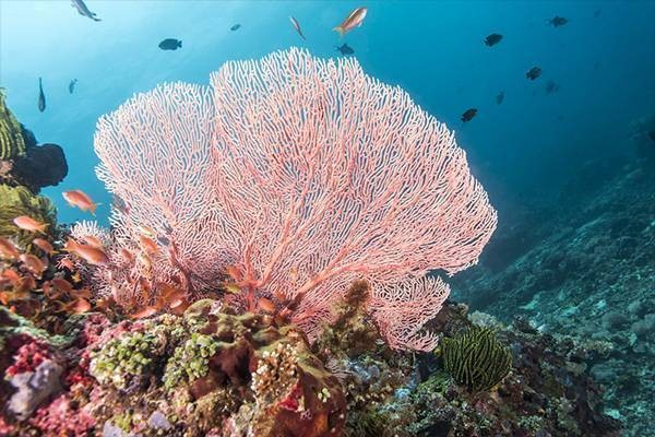 the most famous diving spots in Yasawa
