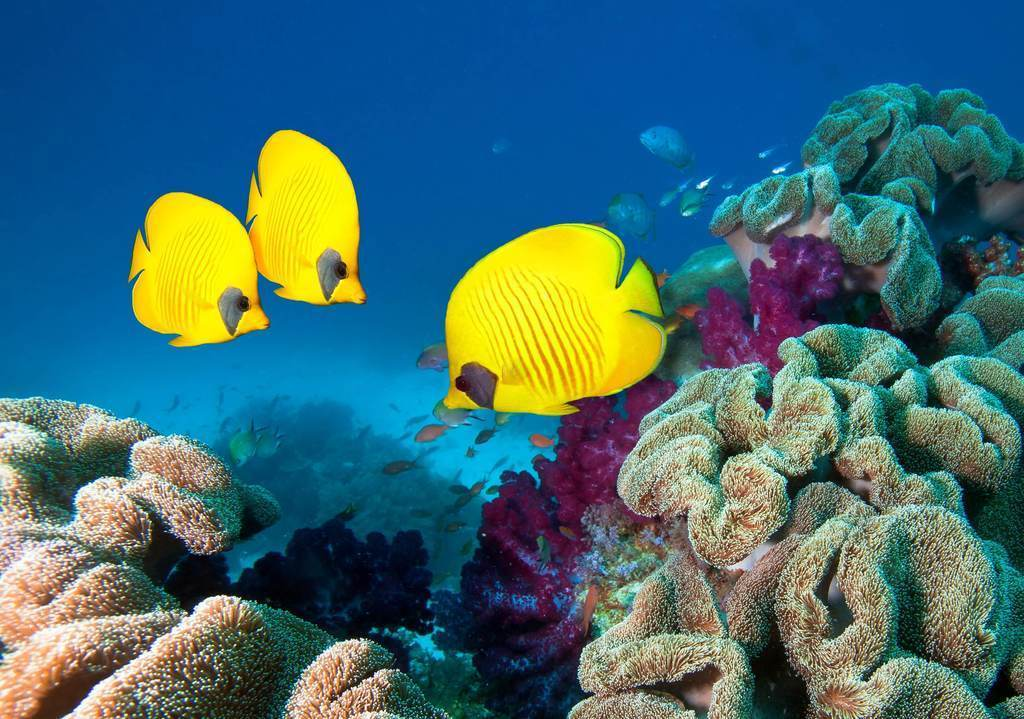 best diving places in Mamanuca and Yasawa islands